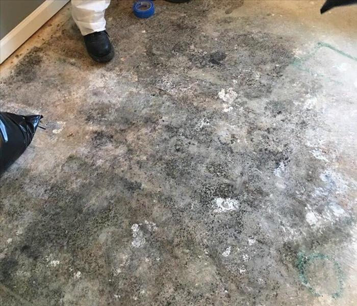 Simpsonville, SC Home Finds Mold
